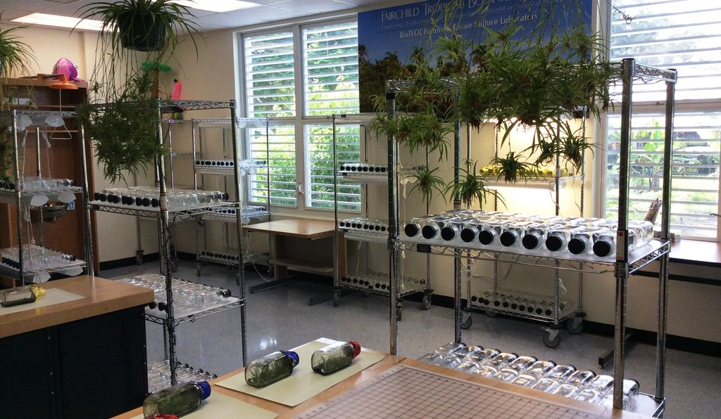 Students transplant orchid seeds and take tissue samples in this mircopropagation lab at the school.