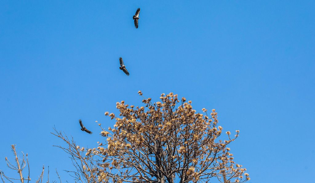 The birds soaring during midday.