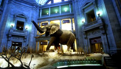 DC Museums are Open, Zoo Closed