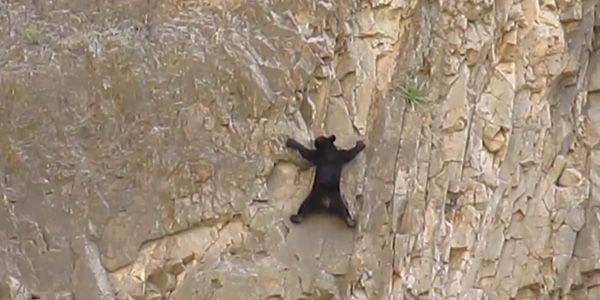 Watch this rock-climbing bear cub!