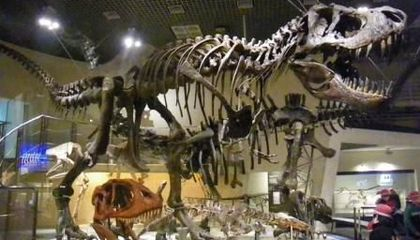 Blog Carnival Edition #6 -- Extinction, Tokyo Museums, and the Official State Dinosaur of Texas