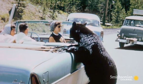 Preview thumbnail for video'Crazy Vintage Footage of Park Visitors Feeding Bears