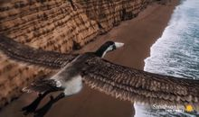 How the largest bird of all time stayed airborne