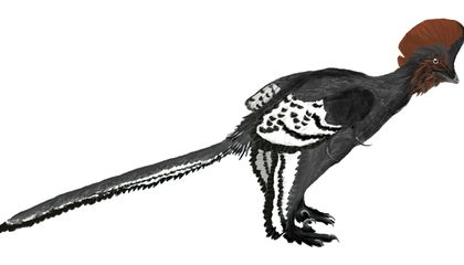 Dinosaurs Have Feathers, Sure, But We May Have Got the Colors All Wrong