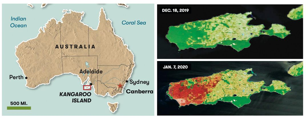 Left, Kangaroo Island sits a few miles off the coast of South Australia. Right, at the height of the fires, in January, most of the island's western half was ablaze, as seen in these images based on data from a NASA satellite.