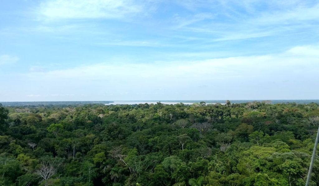 The Smithsonian-led Forest Global Earth Observator (ForestGEO) has three large forest research plots in the Amazon—Amacayacu in Colombia (above), Yasuni in Ecuador and Manaus in Brazil.