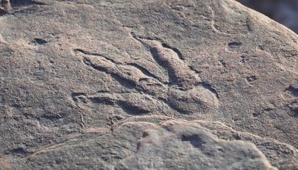 Four-Year-Old Lives Every Child's Dream and Discovers a Dinosaur Footprint