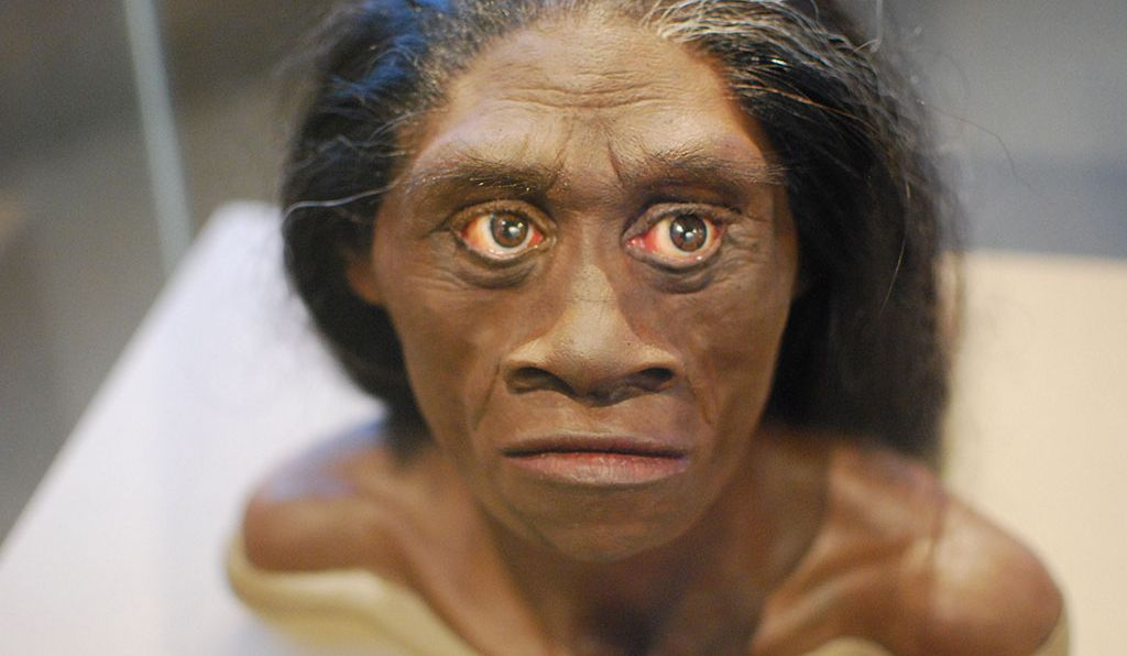 A forensic reconstruction of what a Flores Hobbit might have looked like, currently on display at the National Museum of Natural History. At this point, researchers know little of what may have distinguished males from females.
