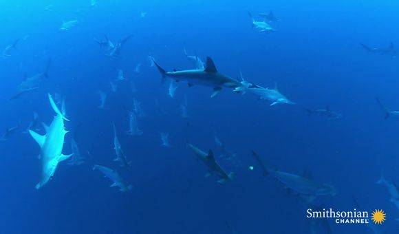 Preview thumbnail for video'You've Never Seen This Many Sharks in One Place