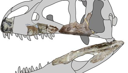 Newly Discovered Dinosaur Was a Giant 'Shark Tooth' Carnivore