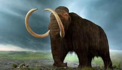 These Are the Extinct Animals We Can, and Should, Resurrect