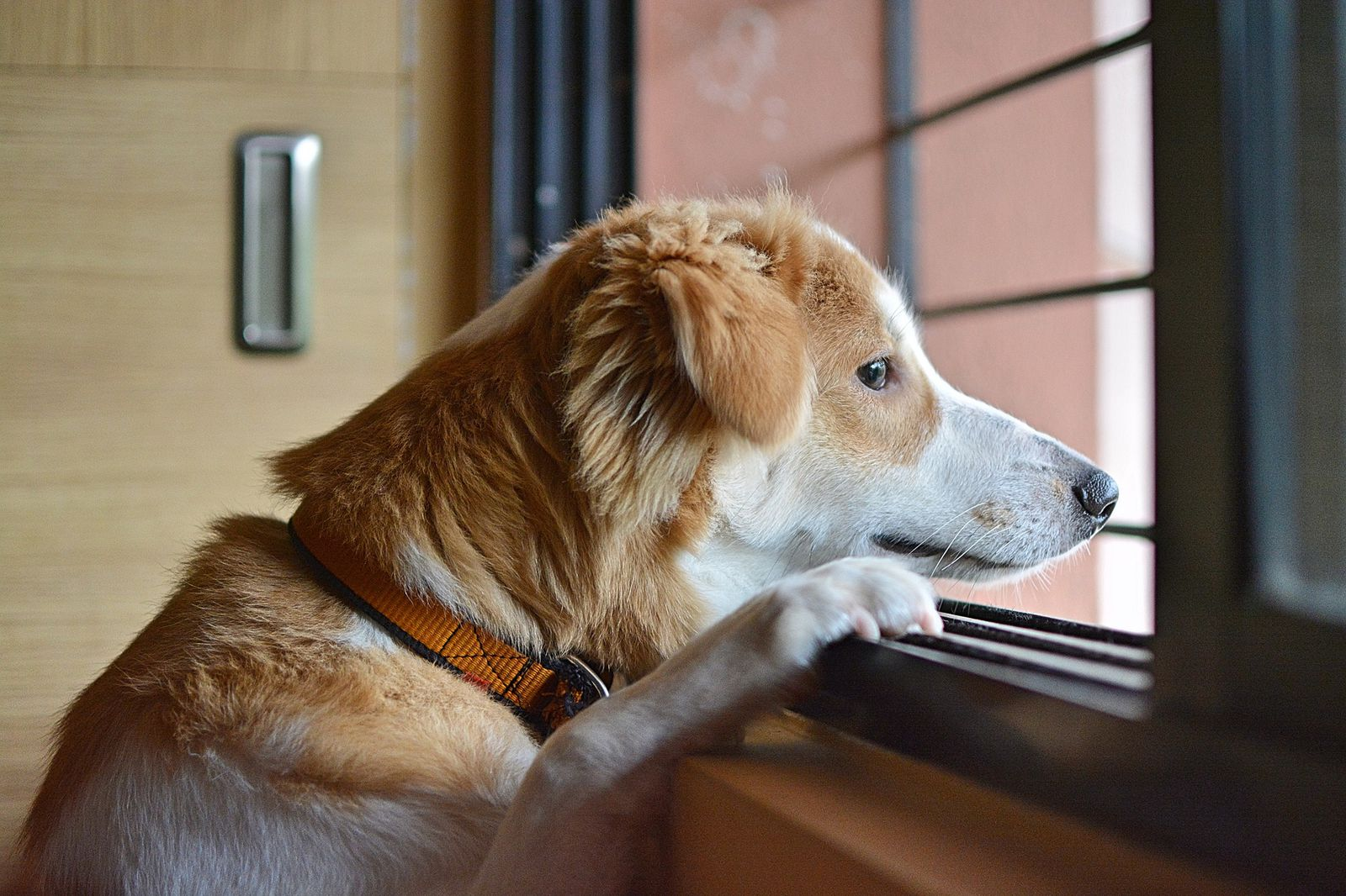 Three-Quarters of Dogs Show Anxiety-Related Behaviors, Study Finds