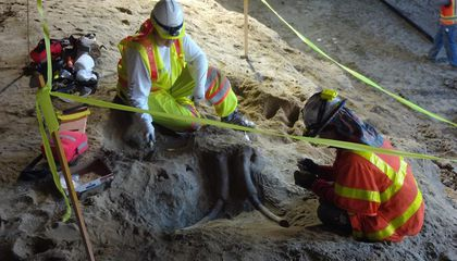 Construction Workers Uncover Ancient Elephant Bones Under L.A.'s Subway