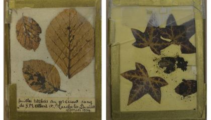 Bloody Leaves Help Solve 82-Year-Old Royal Mystery