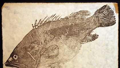 Traditional Japanese Fish Art Could Be a Boon for Conservation