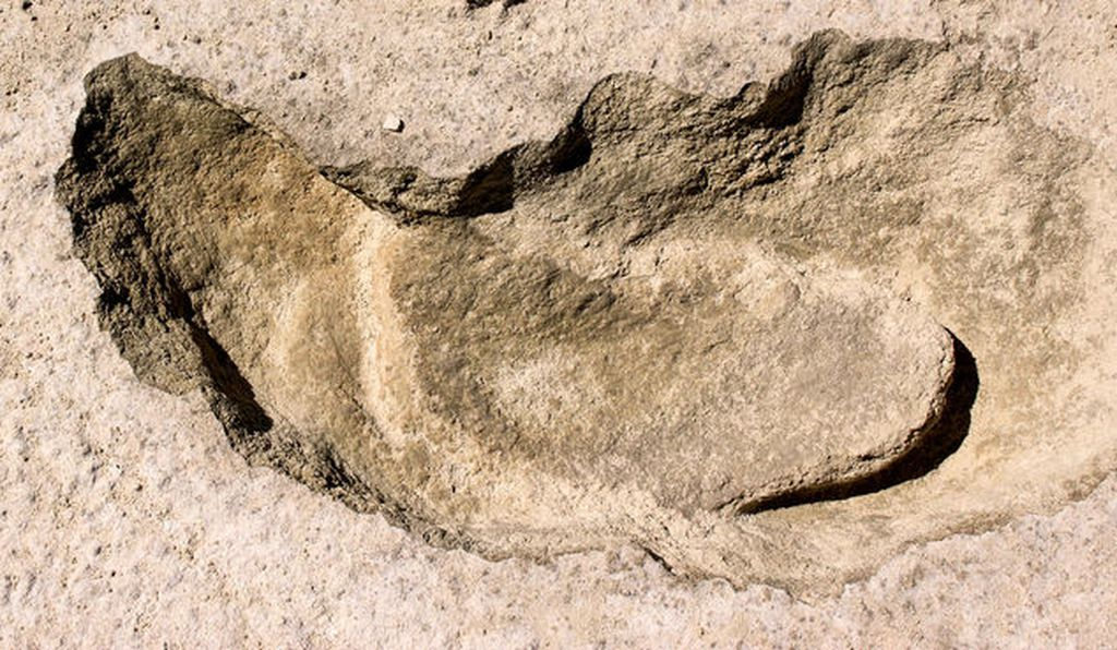 One of the sloth prints with the human footprint inside.