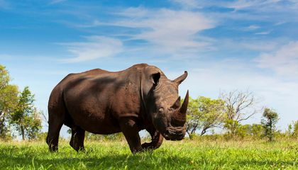 These Women Reduced Poaching on one South African Reserve by 76 Percent