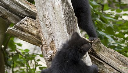 Wednesday Roundup: New Animals, New Museums and New Andean Cub Names