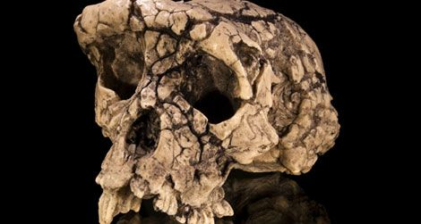 The skull of Sahelanthropus. What does its body look like?