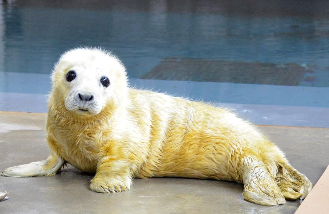 The Zoo S Baby Seal Is Cute And Cuddly But Don T Be Fooled At The Smithsonian Smithsonian Magazine