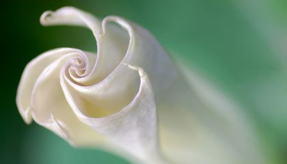 Picture of the Week--A Flower Unfolding