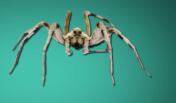 Preview thumbnail for video'Ask Smithsonian: How Do People Get Phobias?
