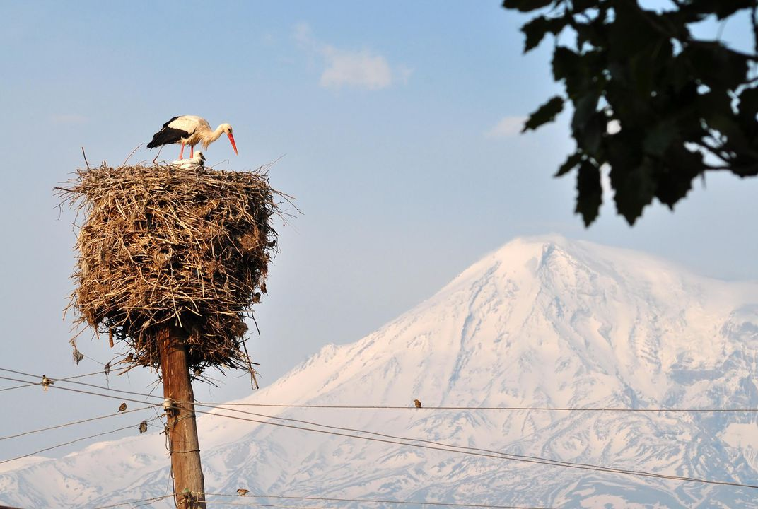 Each Summer, These Armenian Villages Are Taken Over by Hundreds of White Storks