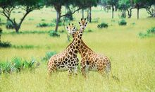 Classic Tanzania Safari description