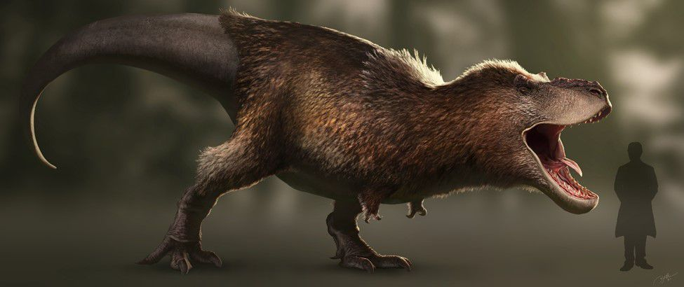 Right-facing, adult, feathered T. rex with its jaw dropped as if it is roaring.