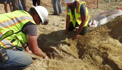 Colorado Construction Crew Unearths 66-Million-Year-Old Triceratops Fossil