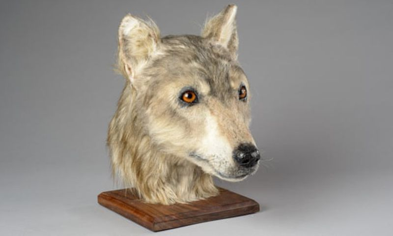 Thanks to Facial Reconstruction, You Can Now Look Into the Eyes of a Neolithic Dog