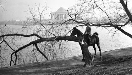 After Pearl Harbor, Vandals Cut Down Four of DC's Japanese Cherry Trees