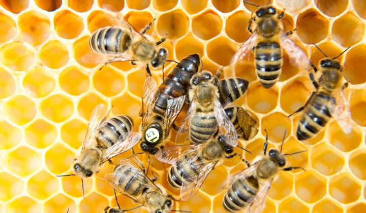 Beehives Can Help Researchers Detect Air Pollution