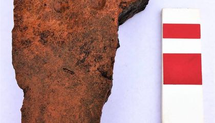 Cat Left a Pawprint in a 2,000-Year-Old Roman Roof Tile