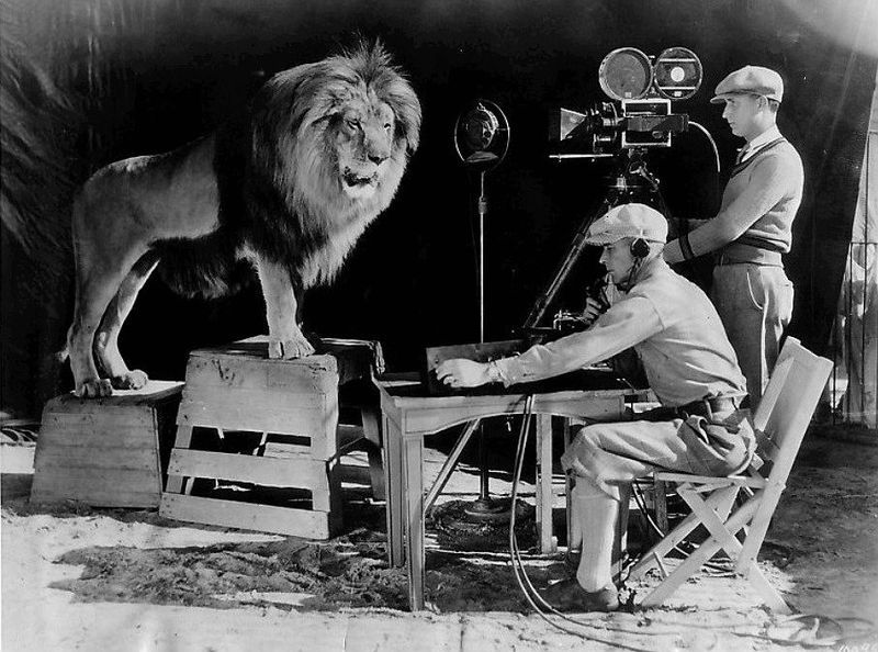 The Story Of Hollywoods Most Famous Lion Smart News Smithsonian