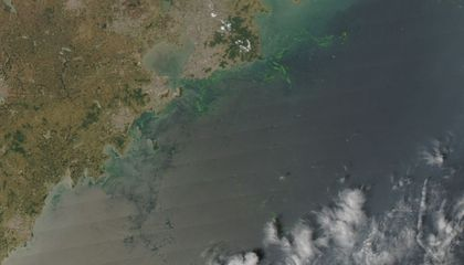 China's Massive Algae Bloom Could Leave the Ocean's Water Lifeless