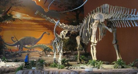 A Suarophaganax (left) harries an enormous Diplodocus at the New Mexico Museum of Natural History and Science