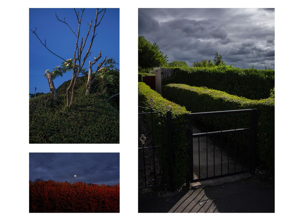 Various hedges shot dramatically