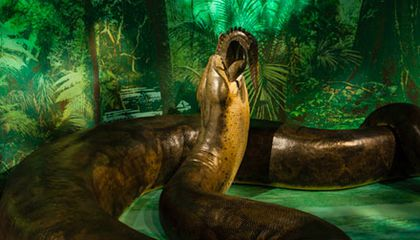 Titanoboa, the 48-Foot Monster Snake, Slithers Into the Natural History Museum