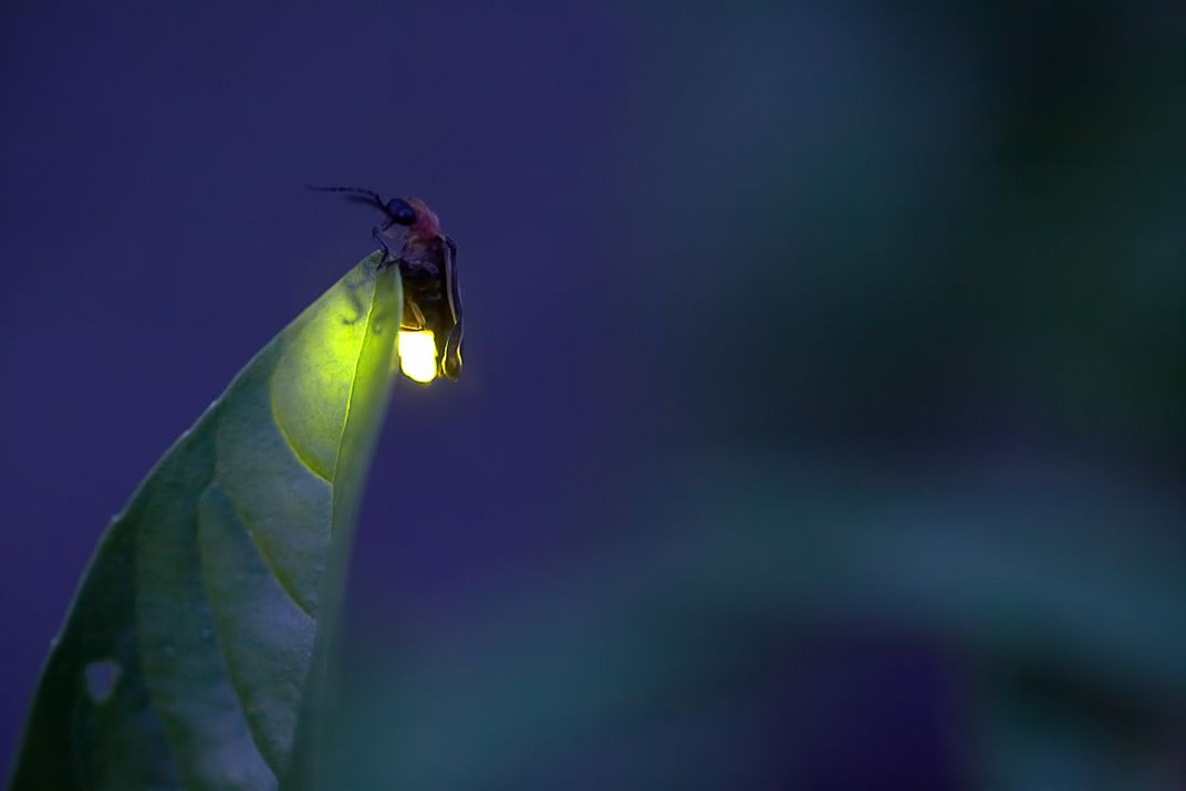 Firefly Sightings Catching fireflies is an important part of summer Help us track where people are seeing fireflies in their backyard Submit your sightings on the