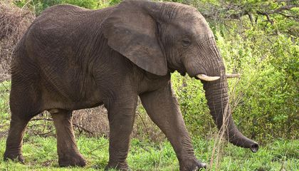 The U.S. Just Announced an Unprecedented Ban on African Ivory