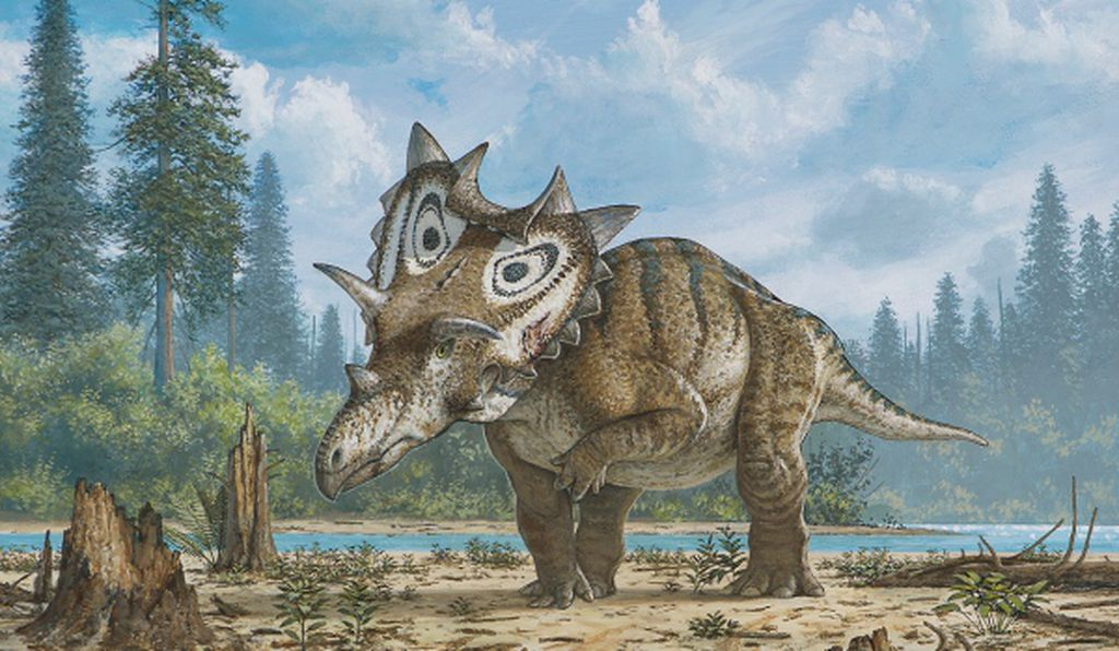 An artists' rendering of the newly named horned dinosaur Spiclypeus shipporum, the latest in a string of discoveries of horned dinos.