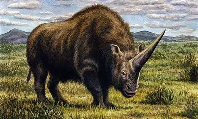 Modern Humans Emerged As Ancient Siberian Unicorns Died Out But Their Demise Wasn T Our Fault Smart News Smithsonian Magazine