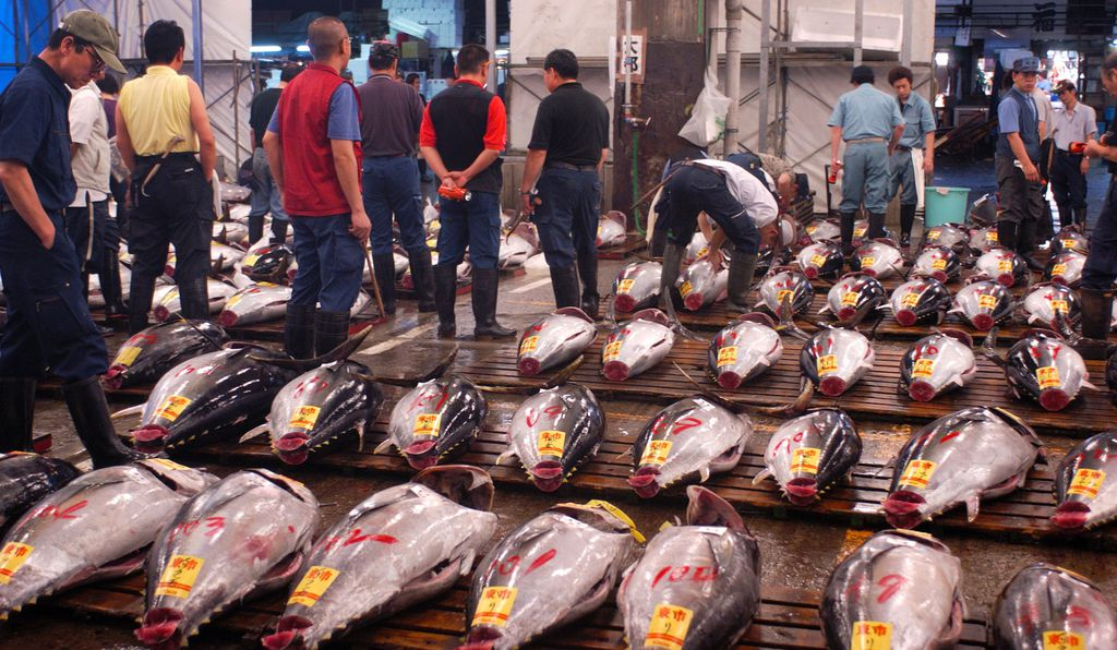 Many of the southern bluefin tuna raised by Australia's aquaculture industry end up at the Tsukiji Market in Tokyo, Japan.
