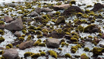 Herds of Moss Balls Mysteriously Roam the Arctic Together