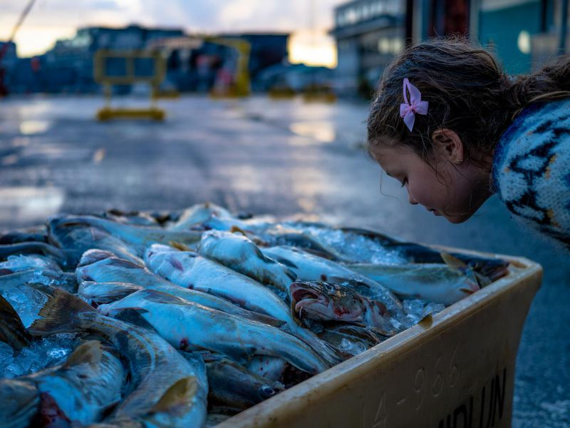 A photograph of a girl smelling a bin of fish.