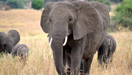 China Has Banned the Ivory Trade