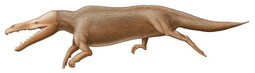 Maiacetus inuus was a land animal highly adapted to life in the sea