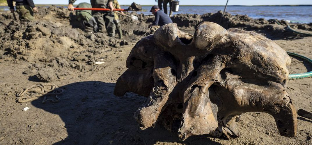 Caption: Mammoth Foot With Ligaments Found In Siberia