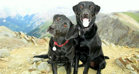 These dogs have hiked